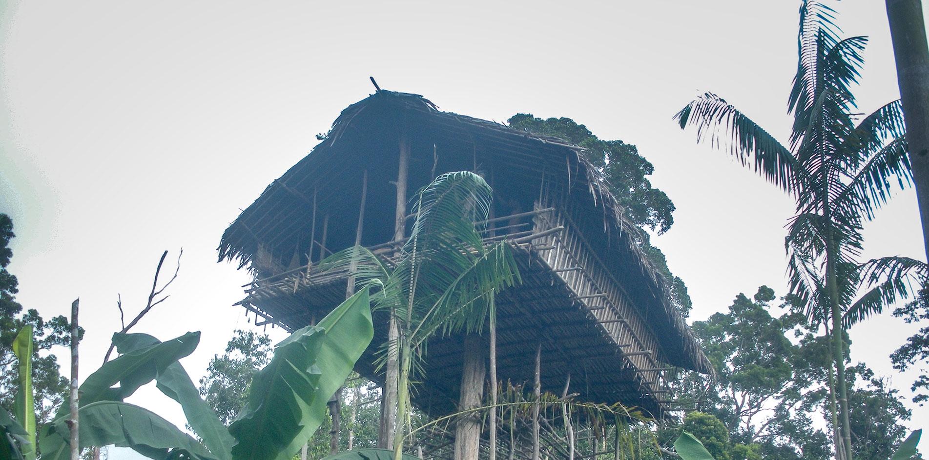 Picture of: Korowai Papua Travel Guide